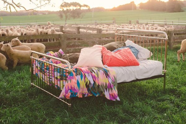 bed in sheep paddock