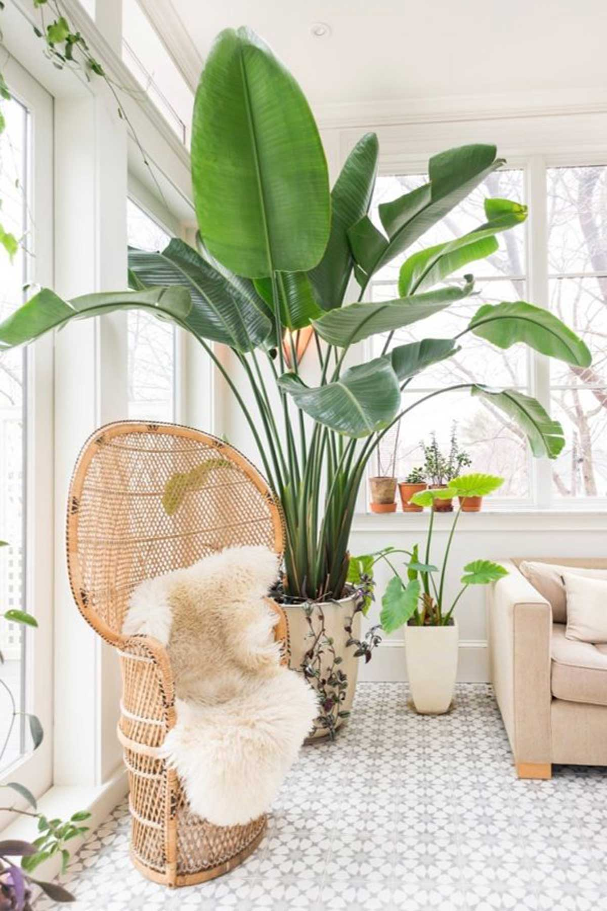 Large Indoor Plant Living Room