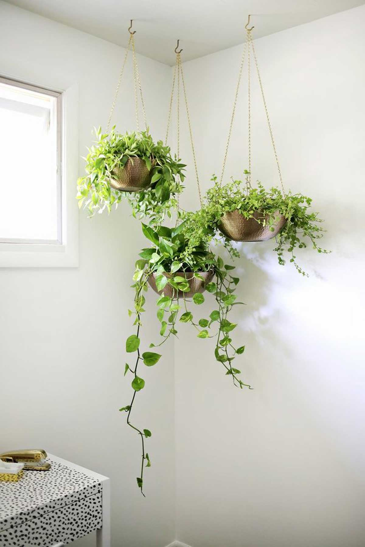 Indoor plants a complete guide on the best indoor plants - Indoor plant decor ideas ...