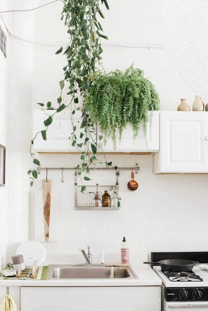 hanging kitchen plants