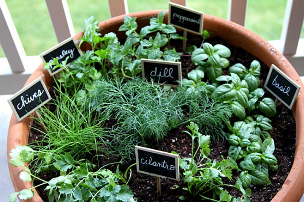outdoor herb garden in large pot