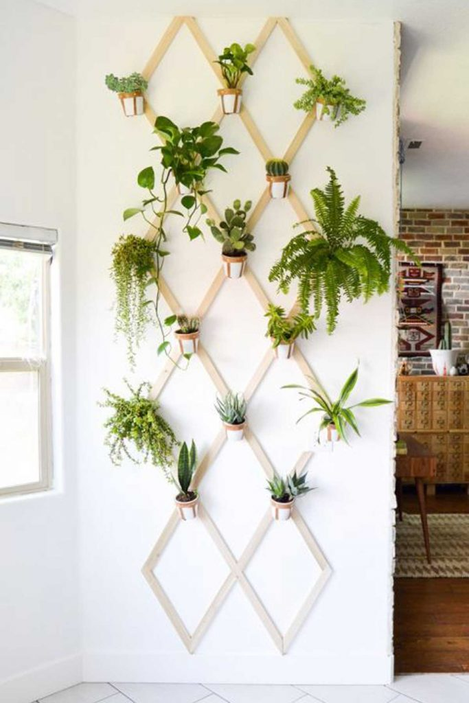 indoor plants on wall