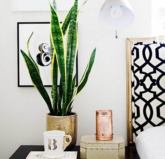 indoor plants snake plant on bedside table