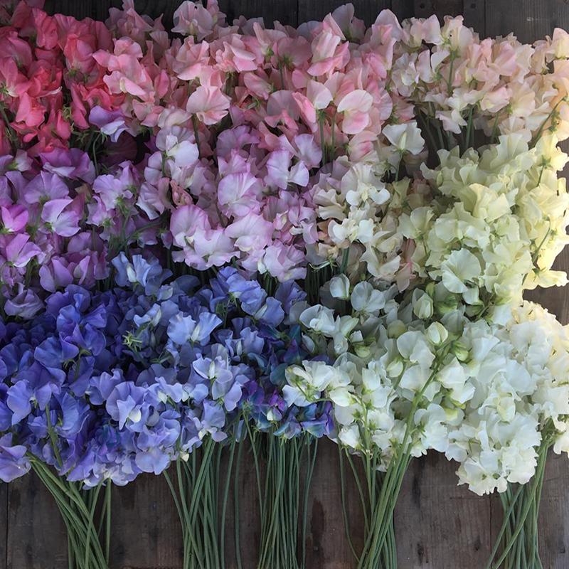 pantone 2018 flowers